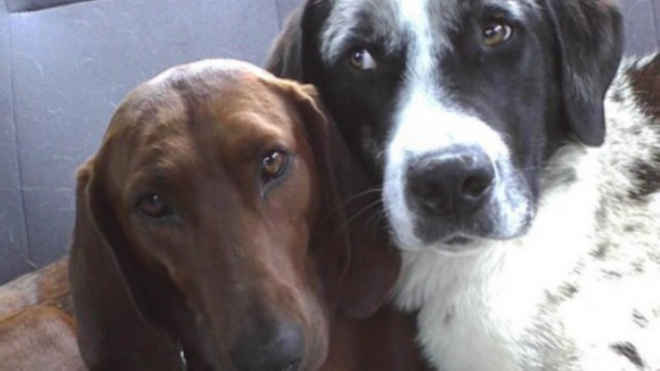 Cadela recusa ser adotada sem que seu amigo seja levado também