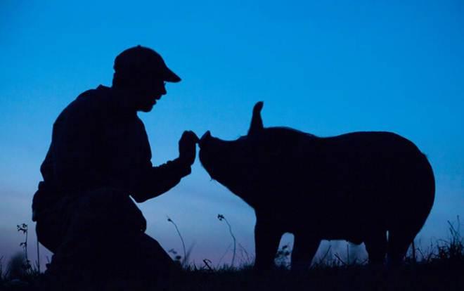 A incrível lição que todos podemos aprender com um fazendeiro de porcos que decidiu parar de matar animais
