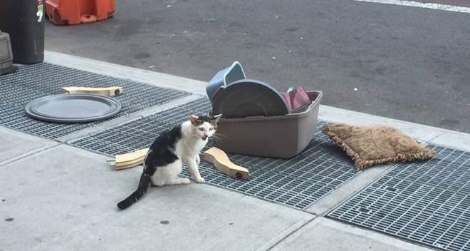 Tutora se enche de gato e o joga pela janela com todos os seus pertences. Dias depois, ele é visto nessas condições
