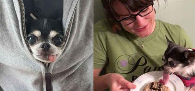 Cadela doente terminal é curada depois de ser adotada e receber carinho