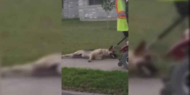 Foi filmado a arrastar cão preso a uma scooter. Agora foi detido