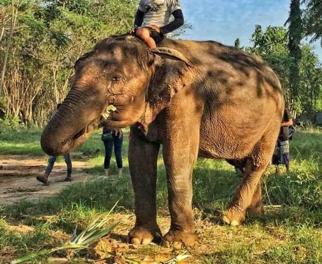 Elefanta de 73 anos é resgatada e se emociona ao dar seus primeiros passos em liberdade