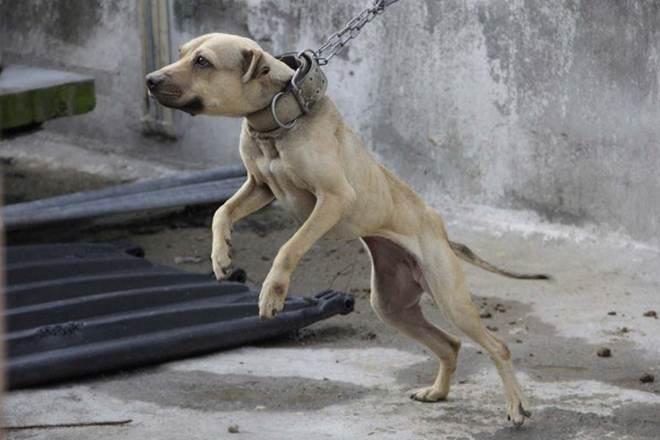 Prisão para a diretora da Associação Protetora dos Animais de Málaga por maus-tratos e falsidade documental