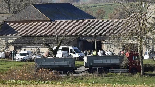 França sacrifica 600 mil gansos devido à gripe aviária