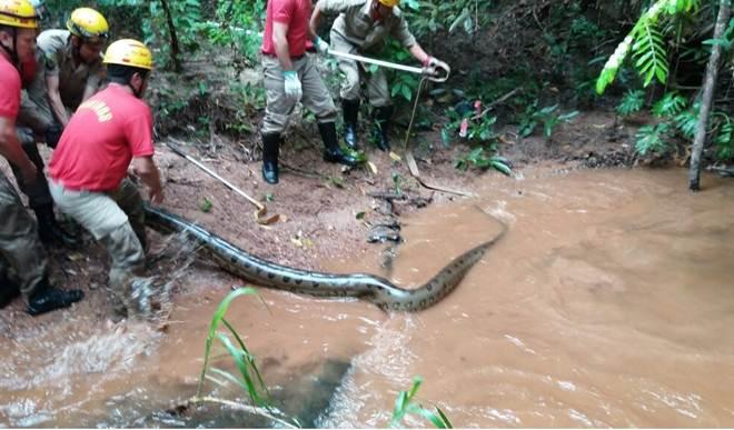 Sucuri de 6 metros é encontrada em condomínio na cidade de Caldas Novas, GO