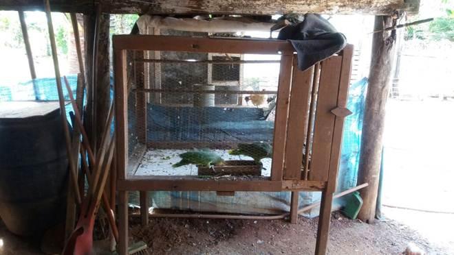 PM aprende animais silvestres em Rio Verde, GO