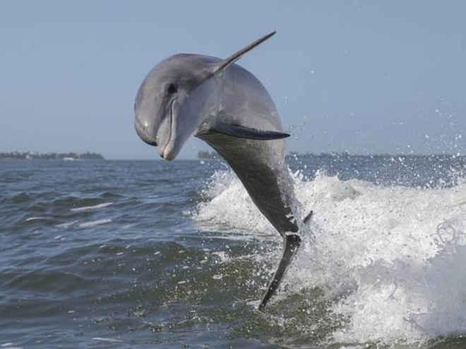 Golfinhos estão morrendo devido ao derramamento de petróleo pela BP – Use a sua voz pelo fim das perfurações de poços petrolíferos