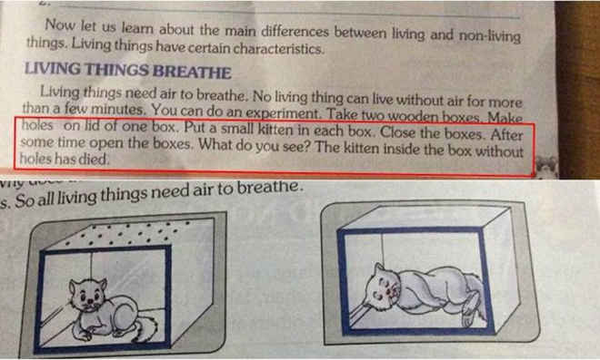 Livro escolar indiano sugere sufocar gatos como experimento científico