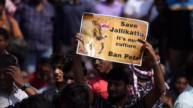 Não é só o Jallikattu: 12 casos de crueldade horrível contra animais ao redor da Índia