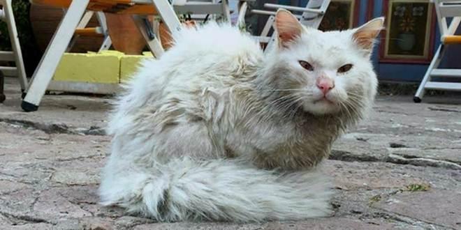 Gato se perde da família durante viagem de refugiados. Então o resgatam e o entregam aos braços de sua família