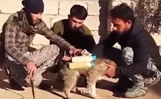Milícia encontra cão-bomba e consegue desarmar explosivo do Estado Islâmico