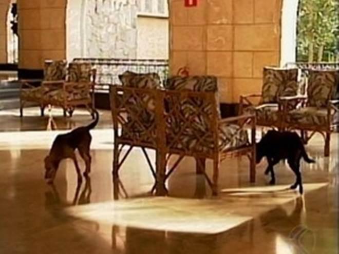 Abandono de animais no Parque do Barreiro é discutido em Araxá, MG