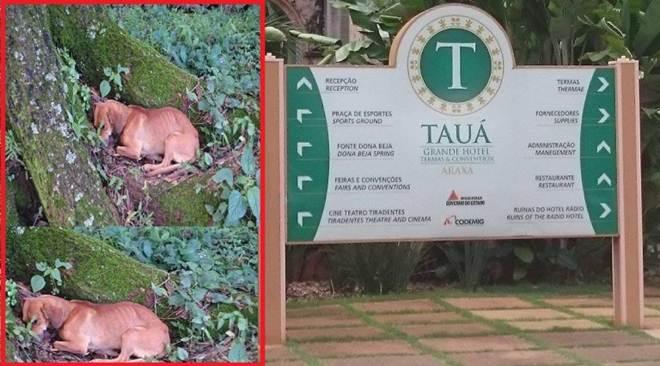 Tauá Grande Hotel pratica maus-tratos e dopa animais em Araxá, MG