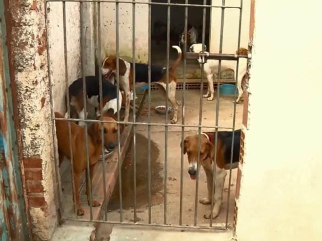 Quatro pessoas são detidas por caça ilegal e 15 cães apreendidos em MG