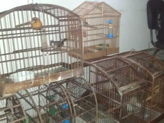 Dezesseis pessoas são presas em rinha de pássaros em Ipatinga, MG
