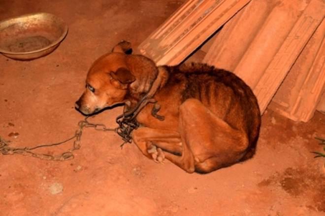 PM atendeu caso de maus-tratos de animais em Lavras (MG); veja fotos