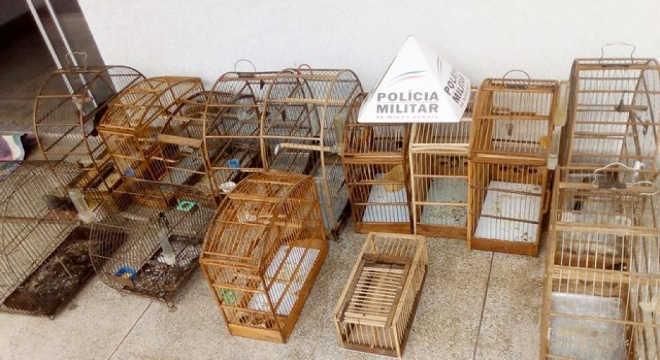 Homem é preso em flagrante por manter em cativeiro 13 pássaros da fauna silvestre