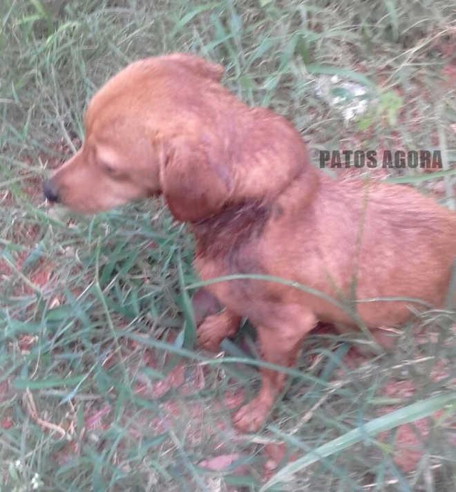 Cão encontrado com ovos de larvas e graves ferimentos na região do pescoço