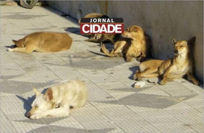 """Projeto """"Castra Móvel"""" abre inscrições para realizar castração de animais em Santo Antônio do Monte, MG"""