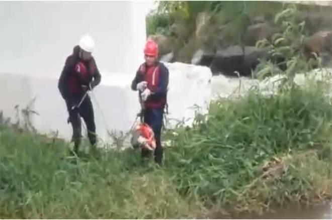 Bombeiros resgatam cão que ficou ilhado em São Lourenço, MG