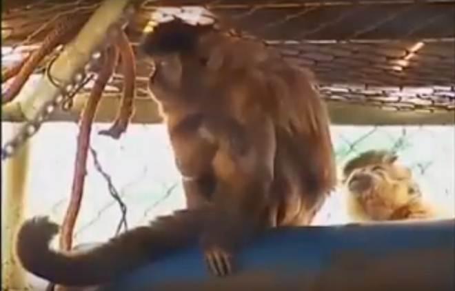 Macacos são alvo de agressão e ficam sem visitas em zoológico de Uberaba, MG