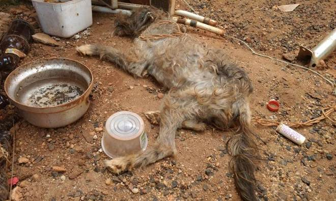 Mulher presa em flagrante por maus-tratos de cão em Uberlândia, MG