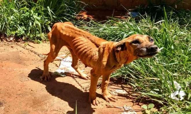 Mulher é presa em Uberlândia (MG) por maus-tratos de animais
