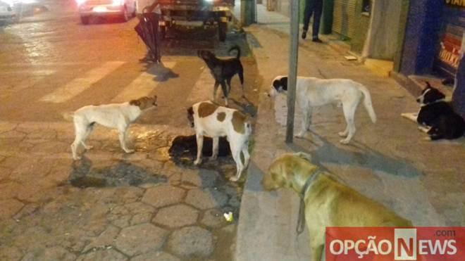 Animais são encontrados mortos com suspeita de envenenamento em Viçosa, MG