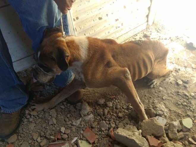Homem é preso após denúncia de maus-tratos a cão em Uberlândia, MG