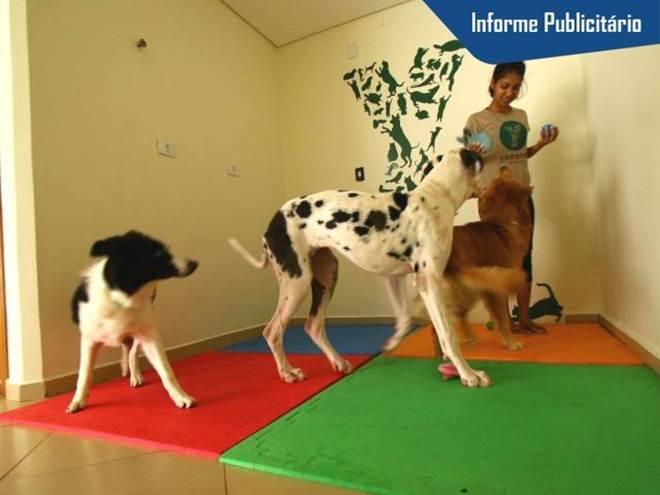 Em hotel sem gaiolas, cão fica 100% livre e aprende a viver bem em grupo