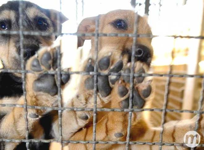 Defensor de animais com leishmaniose assume CCZ de Campo Grande (MS) e quer fim do 'descarte'