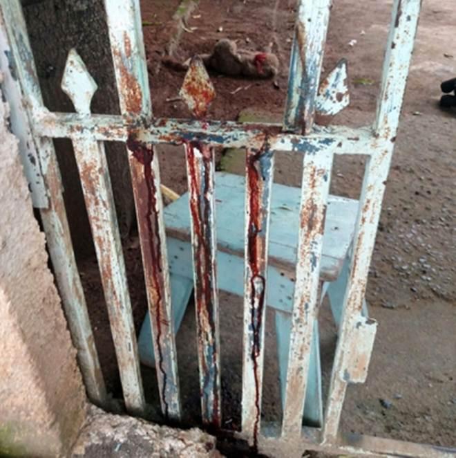 """Cão fica ferido em """"lâmina"""" de um portão no Popular Nova, em Corumbá, MS"""
