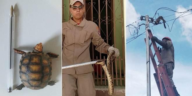 Cresce a captura de animais silvestres na área urbana de Corumbá, MS