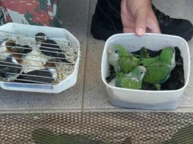 Paranaense é multado em R$ 19,8 mil por tráfico de 9 aves silvestres em MS