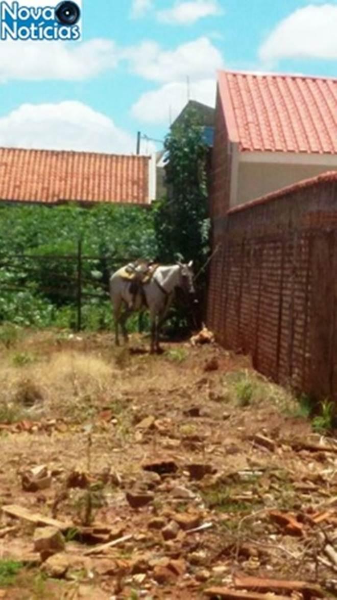 Internauta denuncia maus-tratos a cavalo em Nova Andradina, MS
