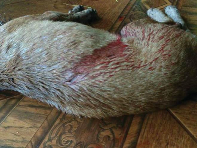Ao buscar abrigo da chuva, cachorro é morto a facadas em Ponta Porã, MS
