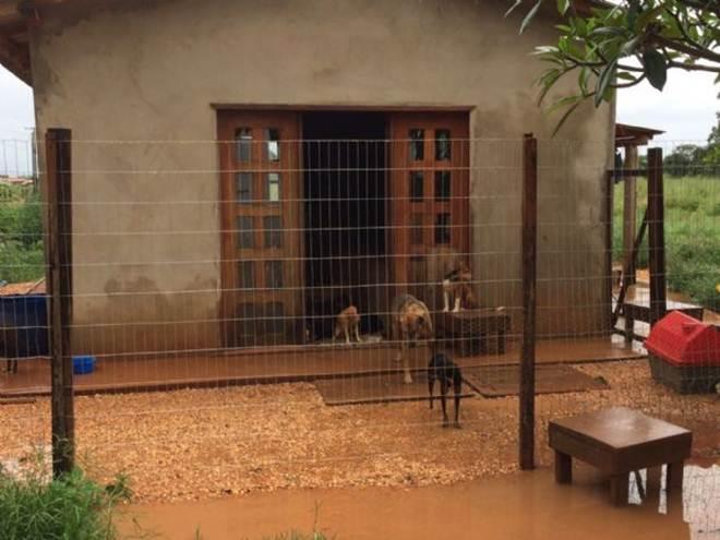 Prefeitura monta 'força-tarefa' para resgatar animais perdidos em meio a alagamento