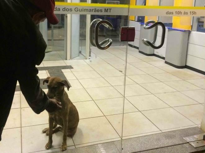 Cadela passa a noite trancada em agência bancária em cidade de MT
