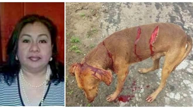 """Mulher esfaqueia cão de estimação do vizinho por """"não se dar bem com o animal"""""""