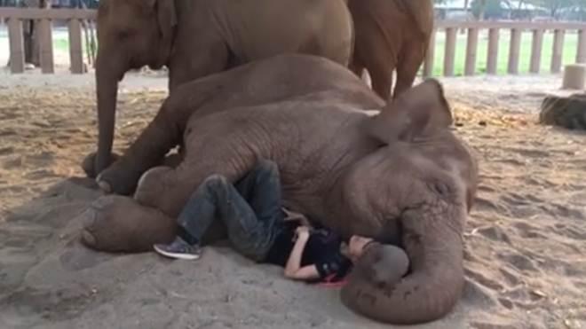 Uma mulher incrível se aconchega a um elefante resgatado para fazê-lo se sentir em segurança