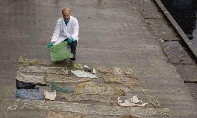 Baleia doente encalhada tinha 30 sacos de plástico no estômago