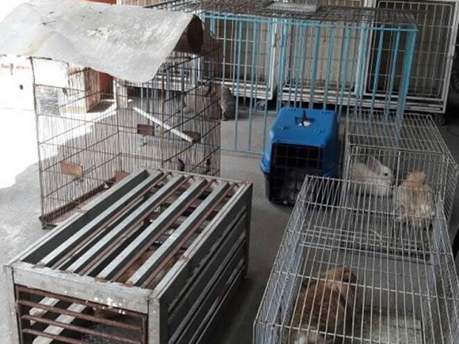 Animais mantidos em condições ilegais são resgatados em Belém, PA