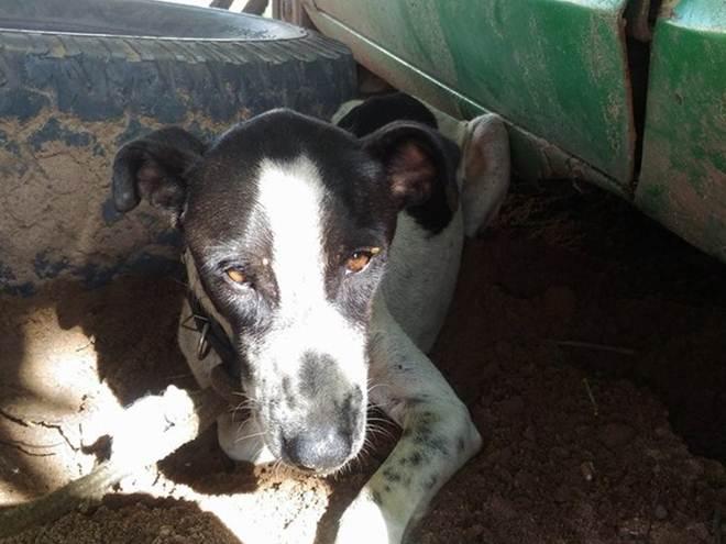 Após denúncias, cão com sinais de maus-tratos é resgatado em Santarém, PA