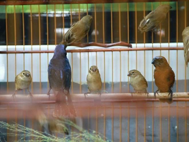 Homem com 39 aves silvestres dentro de casa é preso em Bayeux, na PB