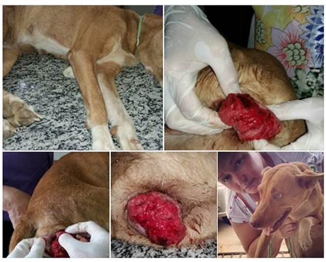Imagem Forte: Homem é acusado de estuprar cadela na cidade de Cajazeiras, PB
