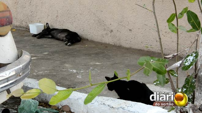 Veterinário alerta para o risco de doenças e acidentes com animais de rua em Cajazeiras, PB