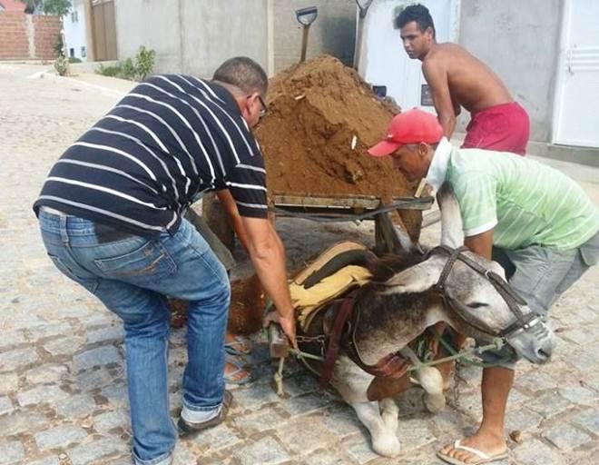 Cena de maus-tratos a um jumento na cidade de Patos (PB) viraliza nas redes sociais
