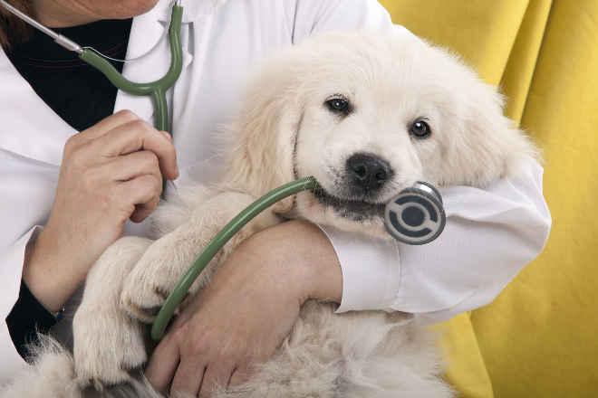 Pederneiras (SP) vai começar atendimento veterinário gratuito