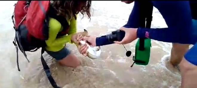 Casal de turistas que molestou tubarão em Fernando de Noronha é multado em R$ 20 mil