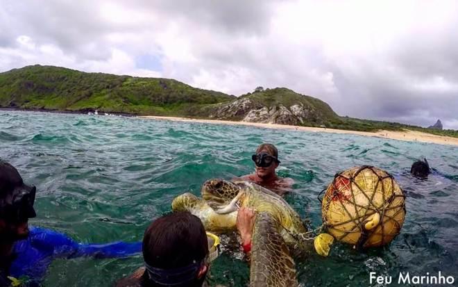 Tartaruga-marinha com anzol preso em seu pescoço encontra as pessoas perfeitas para salvarem sua vida